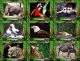 Animal Lovers - Individuals